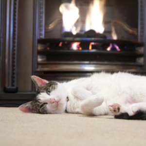 Cat lying on her side in front of the fire | Flowers Flooring
