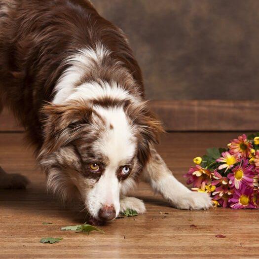 Hardwood Floor Maintenance and Floor Repairs | Flowers Flooring